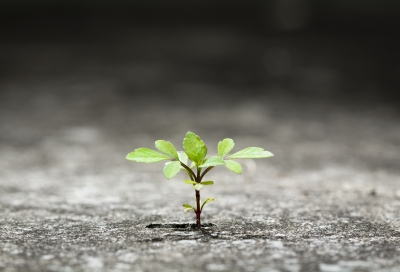 Persistence like a plant